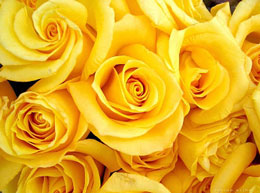 Rosas amarillas y ramos de rosas en Logroño